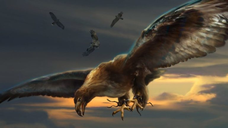cropped-squadron-hawk-final-1-e1505070101150-1.jpg